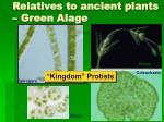 relatives to ancient plants green alage