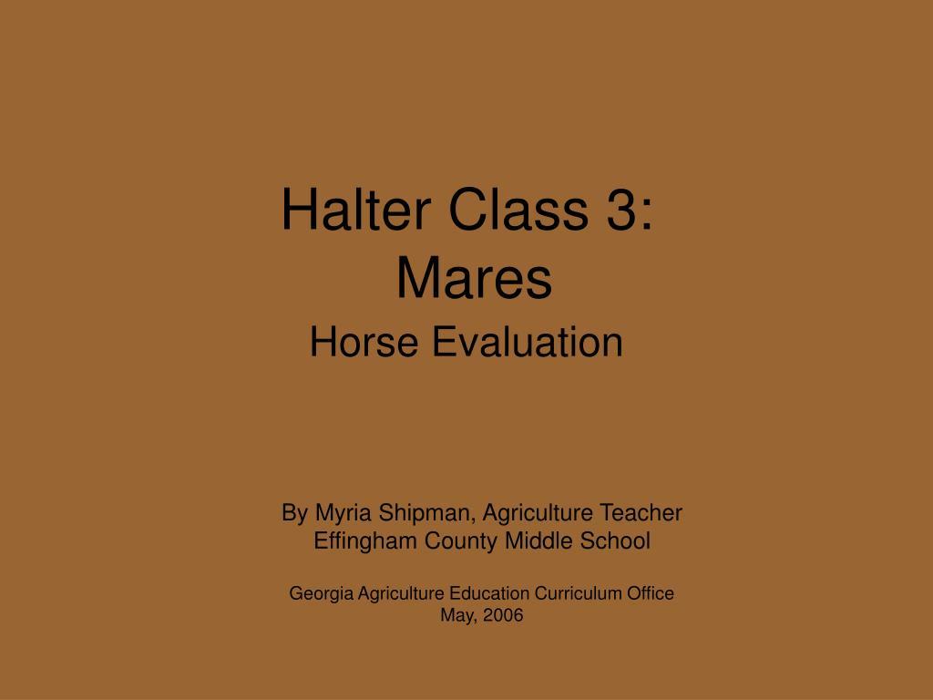 halter class 3 mares l.