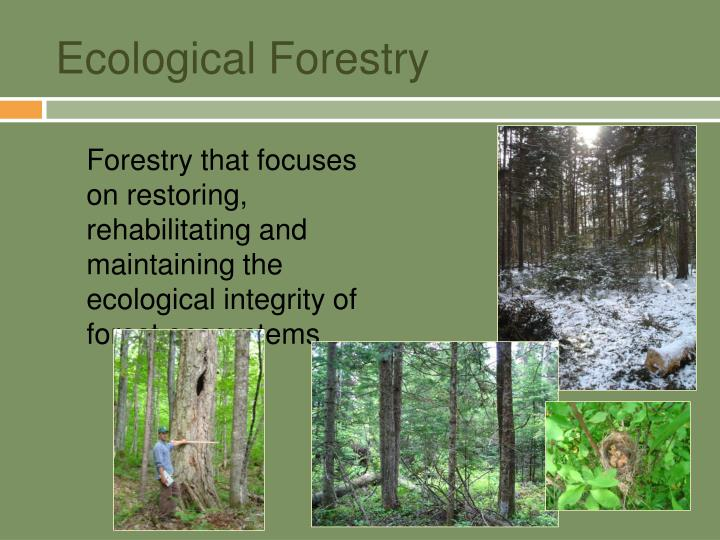 Ecological forestry