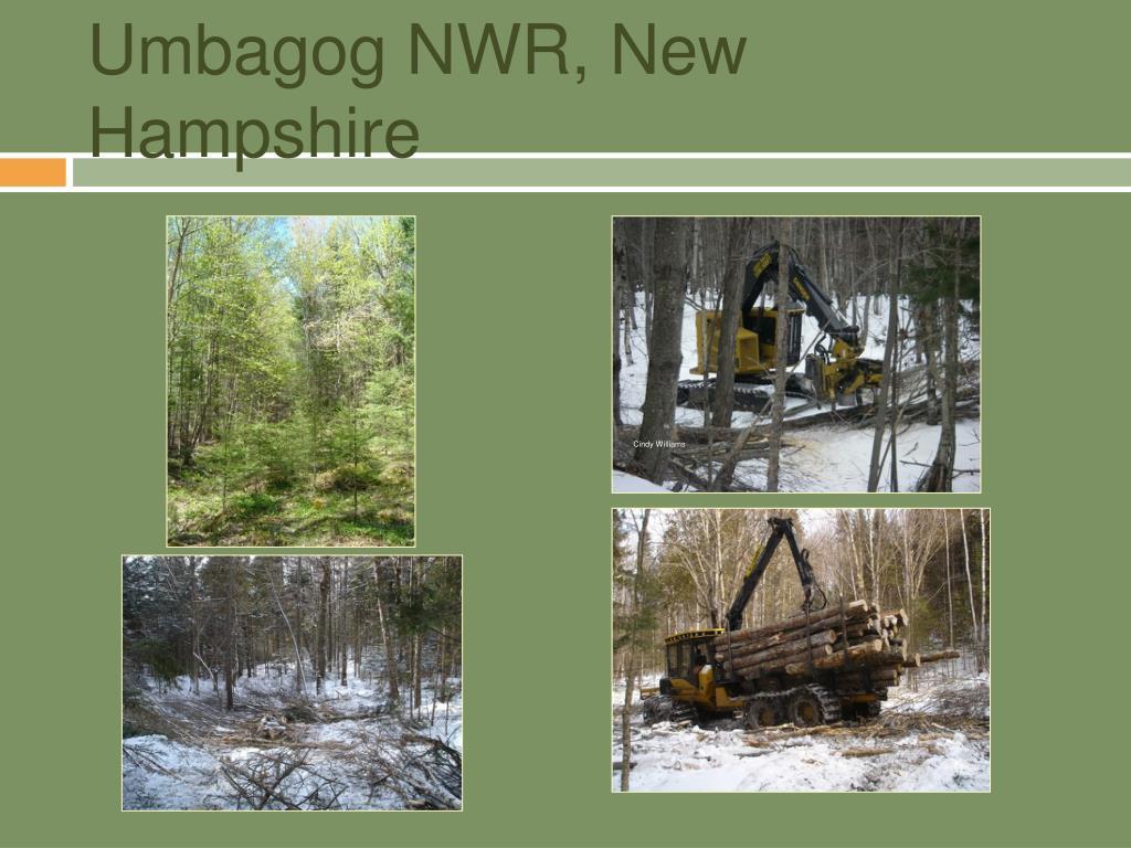 Umbagog NWR, New Hampshire