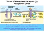 classes of membrane receptors 3 receptor enzymes