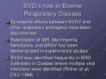 bvd s role in bovine respiratory disease