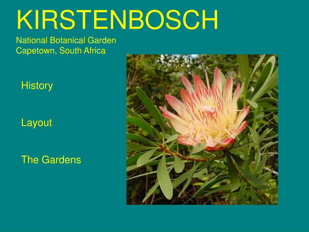 kirstenbosch national botanical garden capetown south africa l.