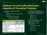 adefovir in lamivudine resistant hepatitis b transplant patients