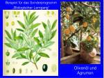 oliven l und agrumen