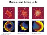 osmosis and living cells