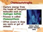 chemoautotrophs