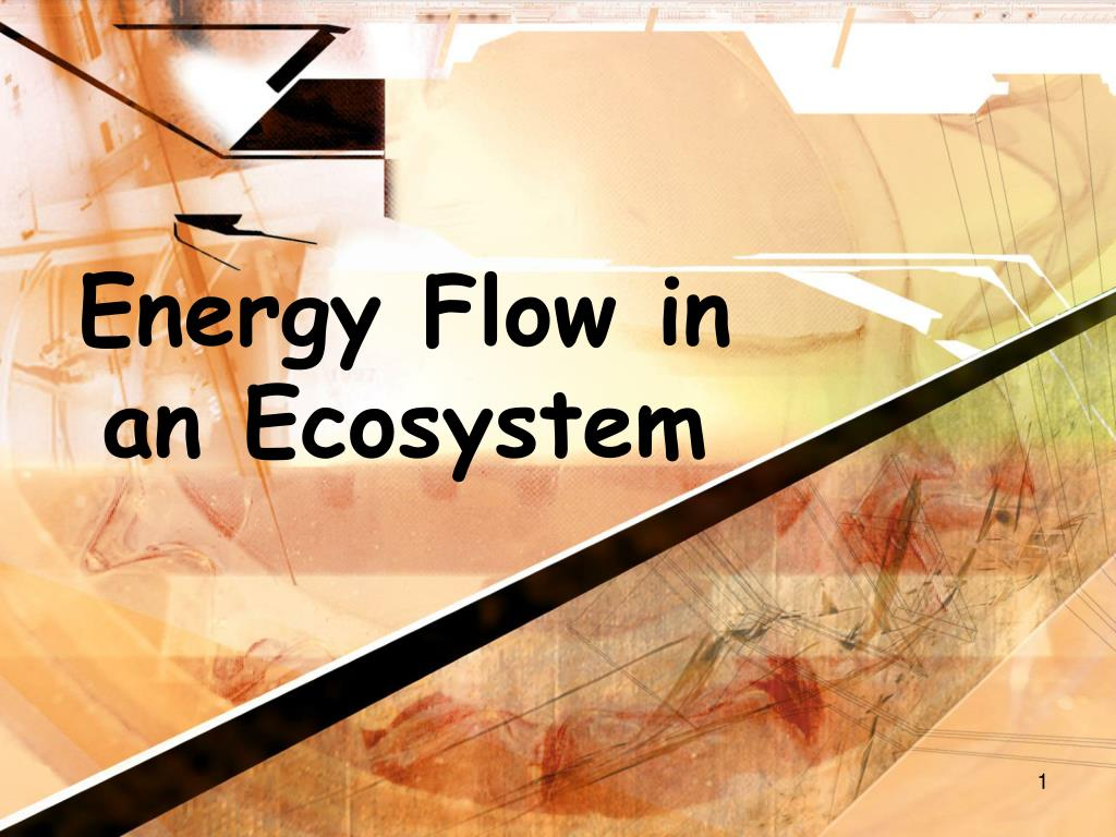 energy flow in an ecosystem l.