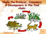name the producer consumers decomposers in this food chain