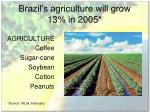 brazil s agriculture will grow 13 in 2005