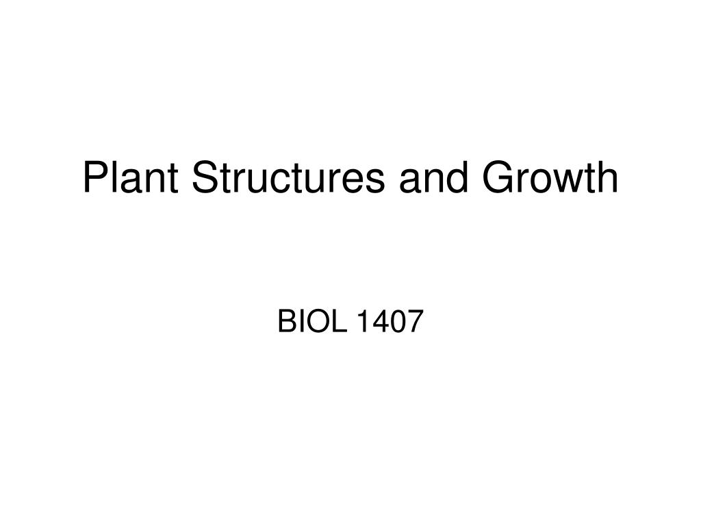 plant structures and growth l.