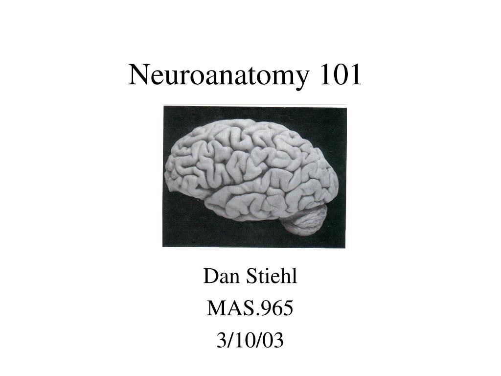 neuroanatomy 101 l.