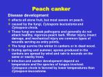 peach canker24