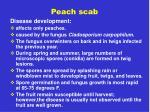 peach scab8