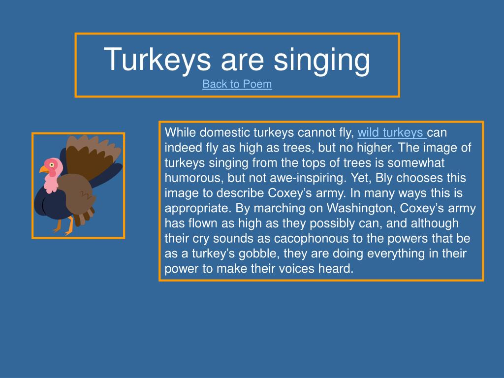 Turkeys are singing
