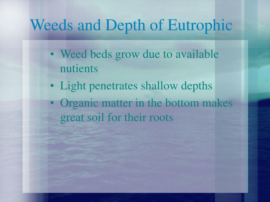 Weeds and Depth of Eutrophic