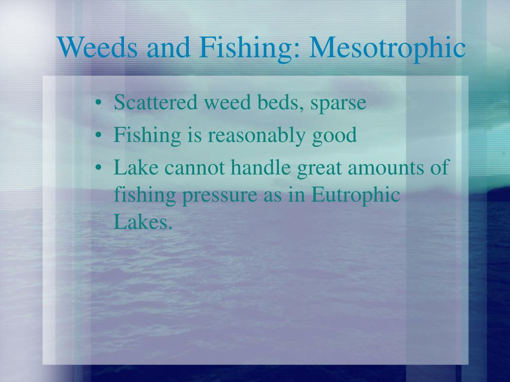 Weeds and Fishing: Mesotrophic
