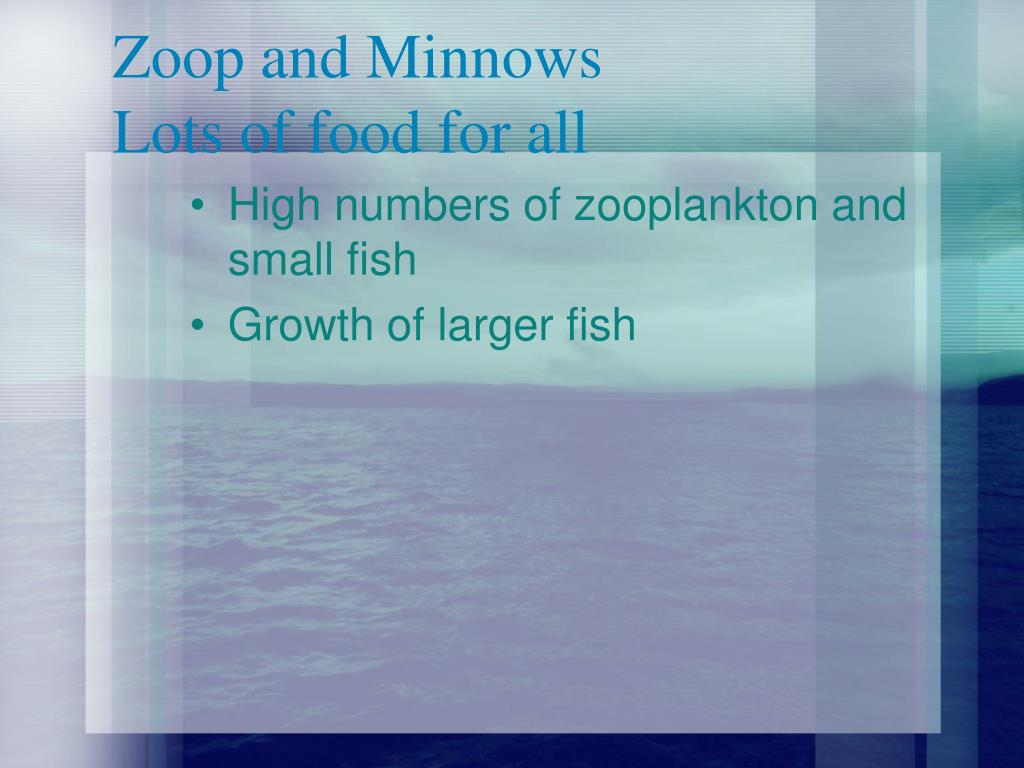 Zoop and Minnows