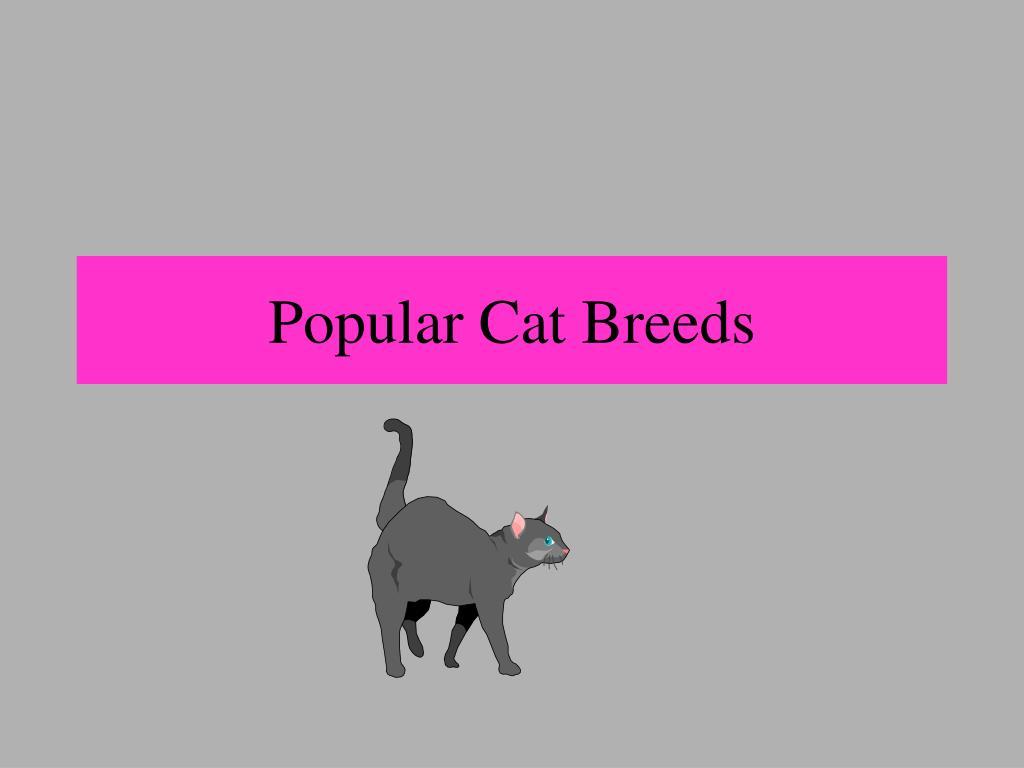 popular cat breeds l.