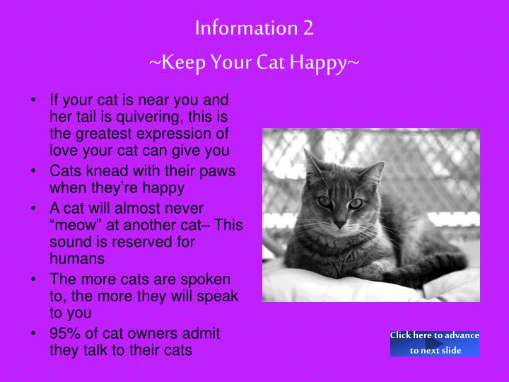 Information 2 keep your cat happy