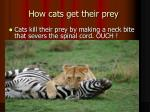 how cats get their prey