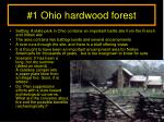 1 ohio hardwood forest