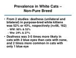 prevalence in white cats non pure breed