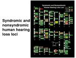 syndromic and nonsyndromic human hearing loss loci