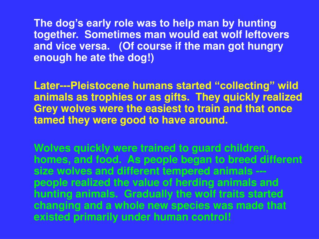 The dog's early role was to help man by hunting together.  Sometimes man would eat wolf leftovers and vice versa.   (Of course if the man got hungry enough he ate the dog!)
