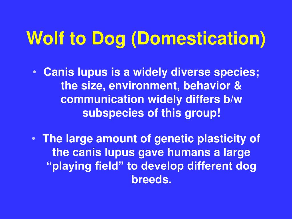 Wolf to Dog (Domestication)