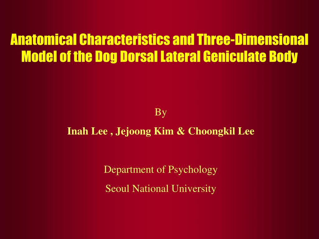 anatomical characteristics and three dimensional model of the dog dorsal lateral geniculate body l.