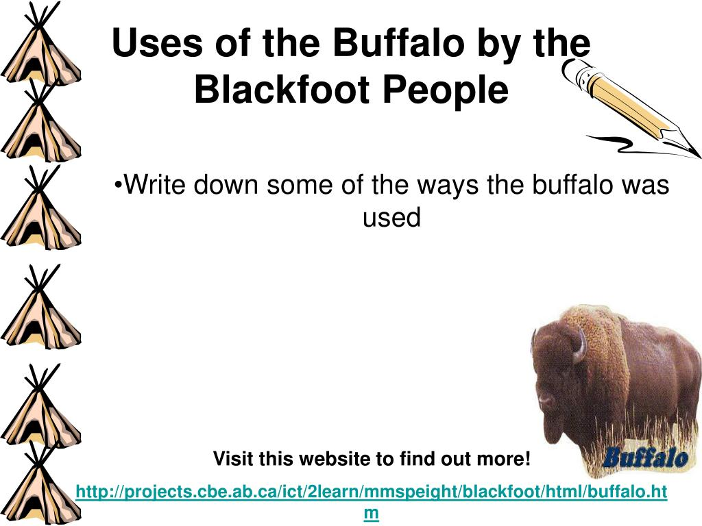 Uses of the Buffalo by the Blackfoot People