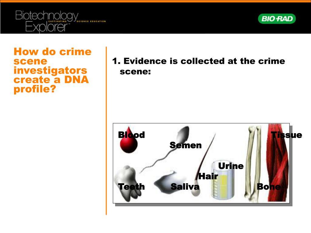 How do crime scene investigators create a DNA profile?