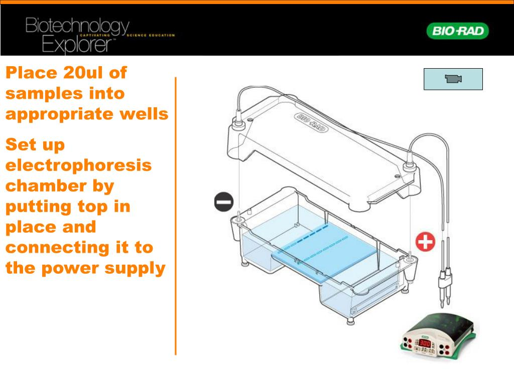 Place 20ul of samples into appropriate wells