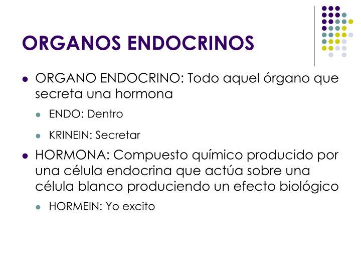 PPT - SISTEMA ENDOCRINO: ORGANOS ENDOCRINOS PowerPoint Presentation ...
