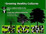 growing healthy cultures