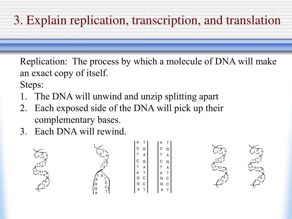 3. Explain replication, transcription, and translation