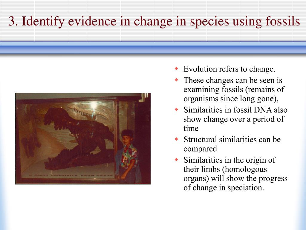 3. Identify evidence in change in species using fossils