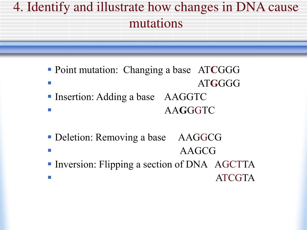 4. Identify and illustrate how changes in DNA cause mutations