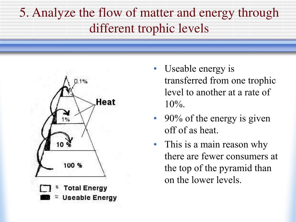 5. Analyze the flow of matter and energy through different trophic levels