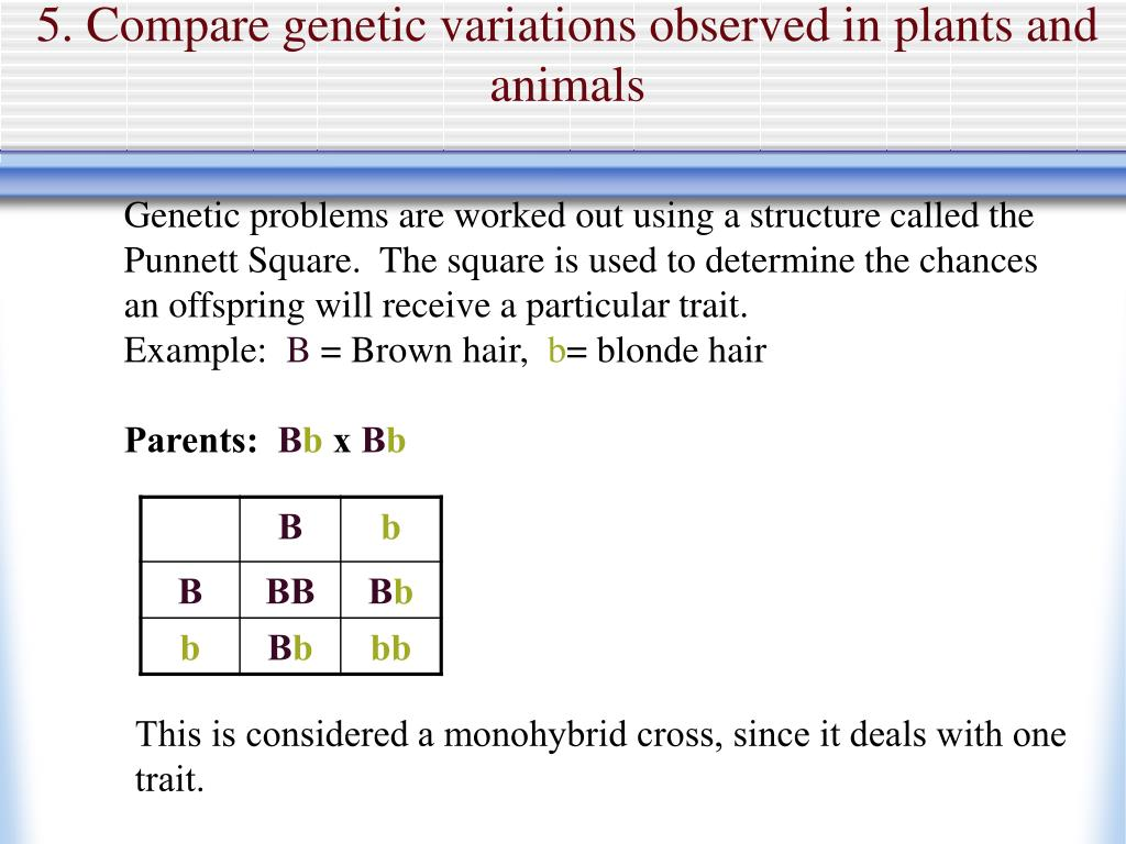 5. Compare genetic variations observed in plants and