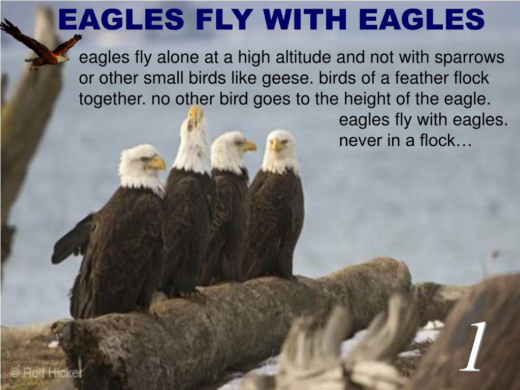 EAGLES FLY WITH EAGLES