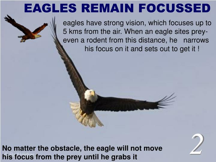 EAGLES REMAIN FOCUSSED