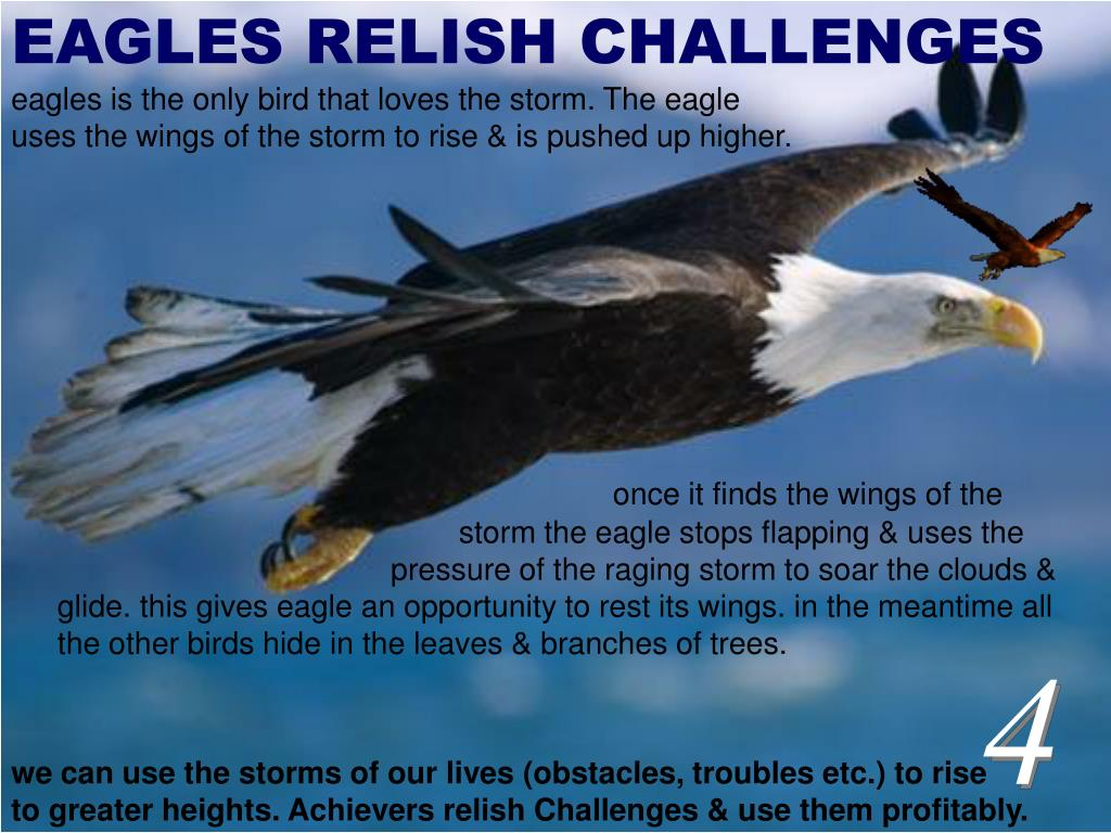EAGLES RELISH CHALLENGES