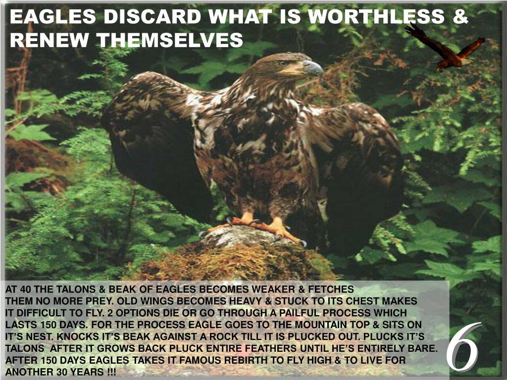 EAGLES DISCARD WHAT IS WORTHLESS &