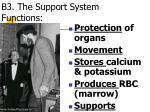 b3 the support system functions