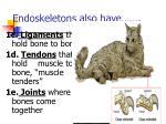 endoskeletons also have