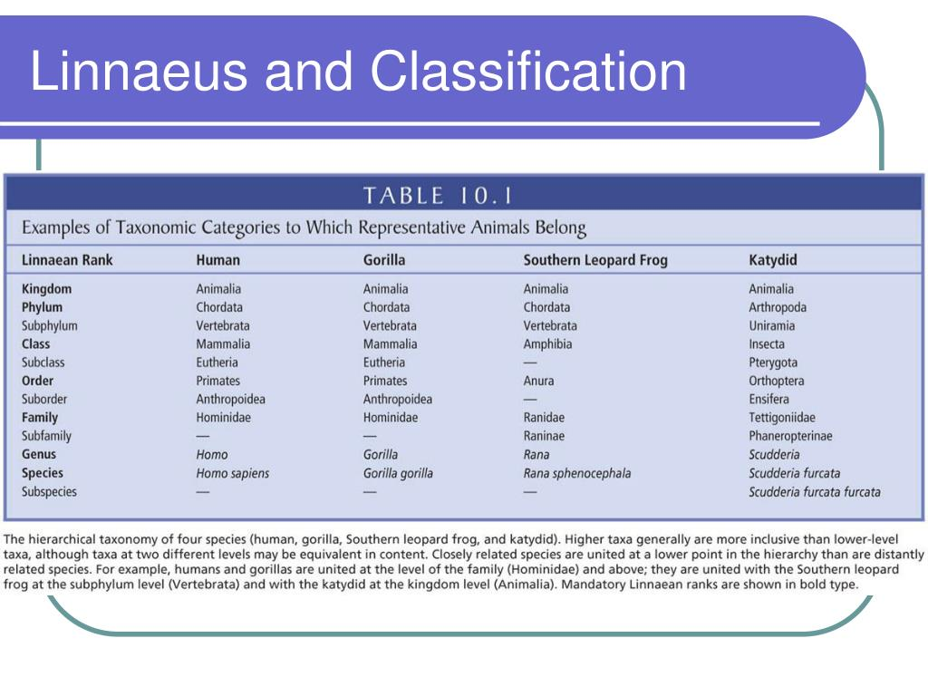 Linnaeus and Classification