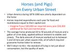 horses and pigs on every urban street