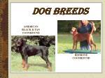 dog breeds10